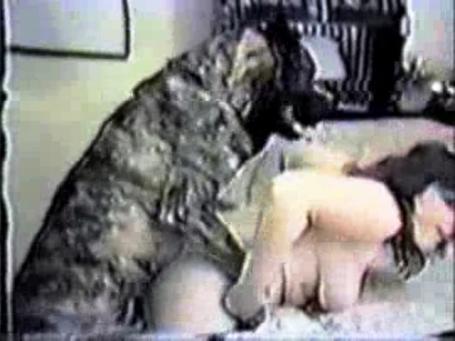 زوجات يمارسن الجنس مع كلابهن